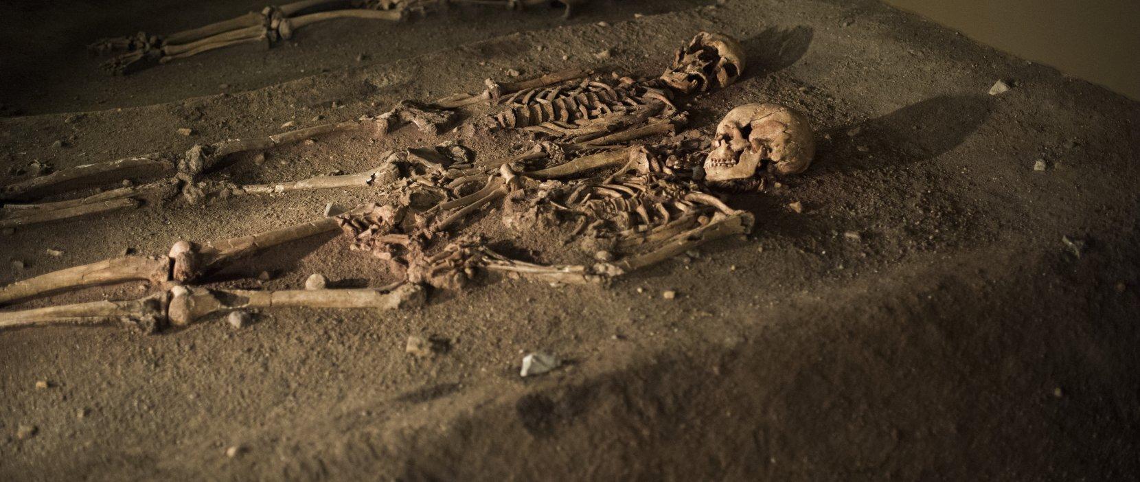 Grav 19 og grav 22 i Vedbækfundenes udstilling